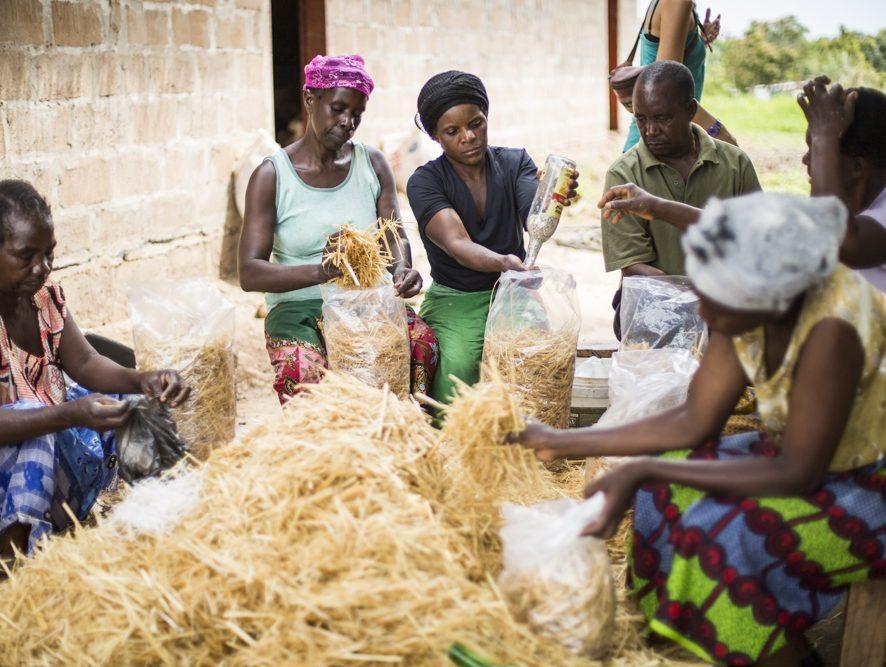 """""""Si no hacemos algo con la crisis climática, en 2080 las cosechas en África se verán mermadas en un 50%"""""""